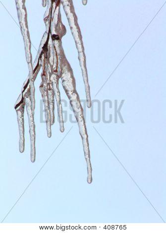 Eiszapfen auf einem Zweig