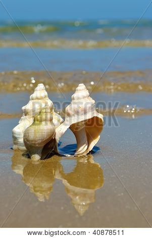 Seashells With Reflection