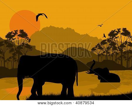 Wild Elephants At Sunset