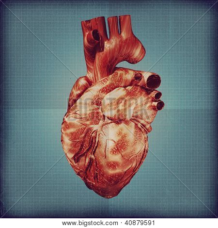 Human Heart Vintage Blueprint.