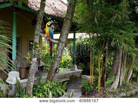 small portion of a small tropical garden