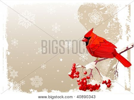 Red Cardinal bird sitting on mountain ash branch