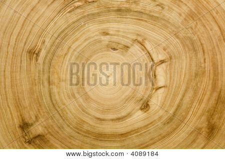 Cut Log Woodgrain Texture