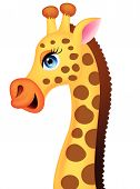 Giraffe head cartoon