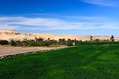 picture of hatshepsut  - Green crops give way to sandy desert in the city of Luxor - JPG