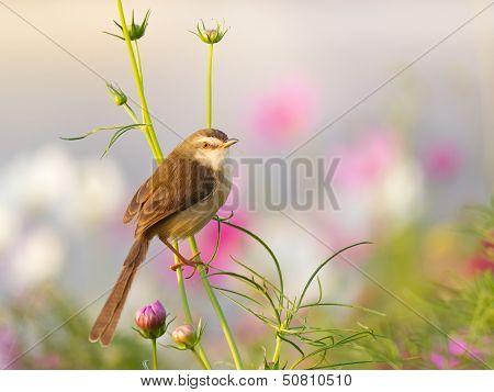 Bird On Flower In The Garden