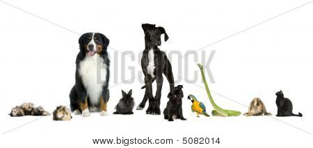 Group Of Pets - Dog, Cat, Bird, Reptile, Rabbit, Ferret- In Front Of A White Background