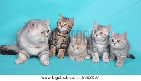 Cat And  Kittens