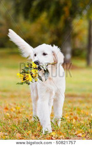 golden retriever puppy with flowers