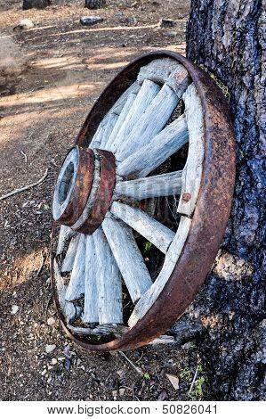 Wagon Wheel Leans Against Pine Tree