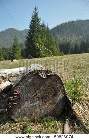Rotten Stump In A Clearing In The Mountains. Low Tatras, Slovakia