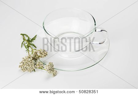 Glass tea cup and herbs