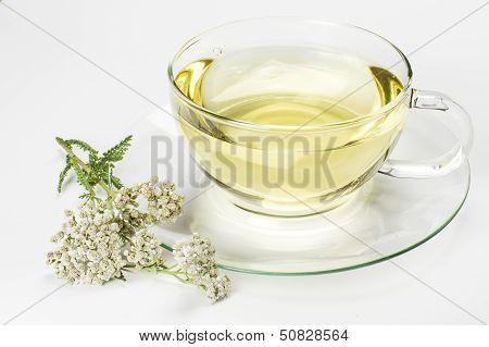 Herbal tea and fresh yarrow