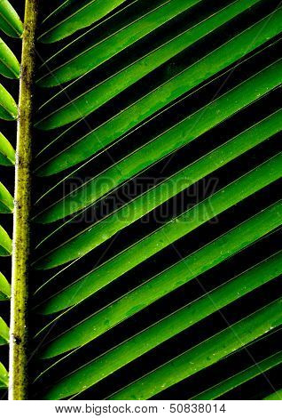 Green Background With A Lush Tropical Palm Leaf