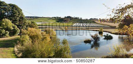 Vineyard Tasmania
