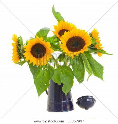 sunflowers in flower pot