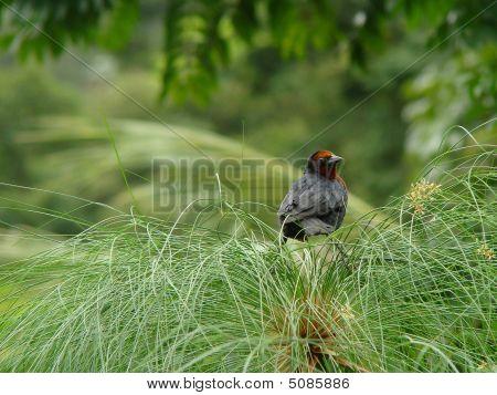 A Black Bird With A Dark Red Neck