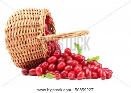 Fresh cornel berries in wicker basket, isolated on white