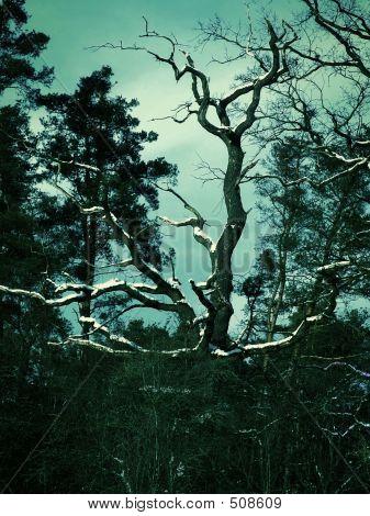 Cross-processed Tree