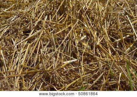 Hay Bales In Hayfield