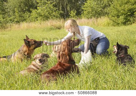 Dog Trainer Feeding Dog