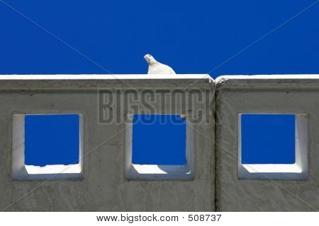 Abstract Shot Of A White Pidgeon