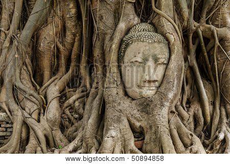 Buddha head in old tree