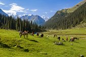 stock photo of herd horses  - Horses grazing in mountains of Tien Shan - JPG