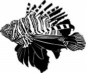 pic of dragon-fish  - marine aquarium fish Zebra Lionfish background silhouette illustration on a white background - JPG