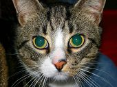 Cat Look poster