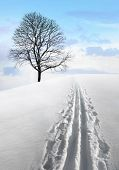 stock photo of nordic skiing  - Nordic ski track in field with single bare tree - JPG
