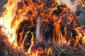 image of inflamed  - body of flame inflaming in the field