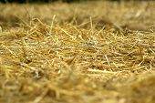 foto of hay bale  - Details of hay straw on a bale in close up view agriculture background image - JPG