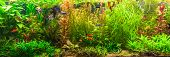 foto of shoal fish  - A green beautiful planted tropical freshwater aquarium with fishes - JPG