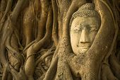 pic of expressionism  - The Head of Buddha in Ayutthaya - JPG