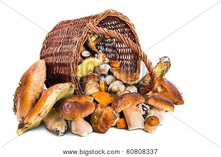 Basket Full Of Mushrooms On A White Background