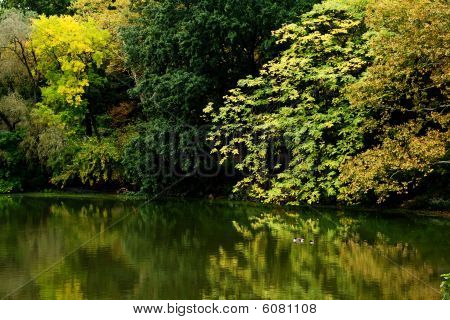 Colorful Fall Scenery Landscape