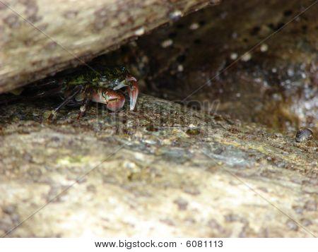 Hide-A-Crab