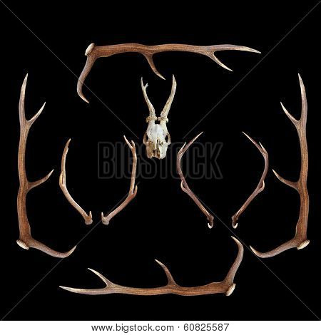 Deer Hunting Trophies On Dark Background