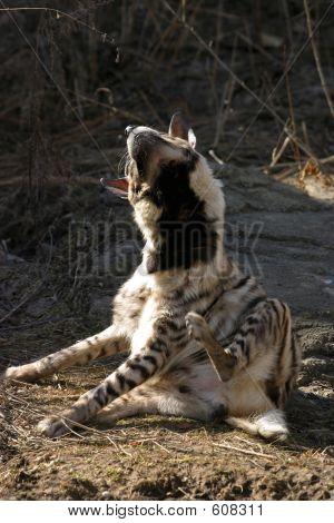 Hyena - 2