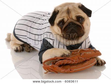 Pug Baseball