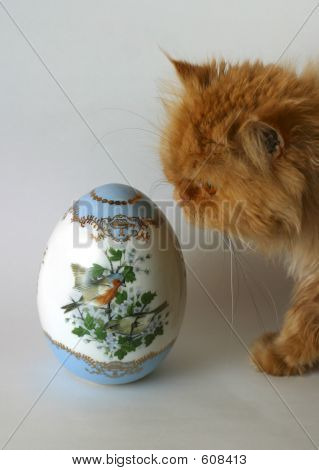 Cat And An Easter Egg