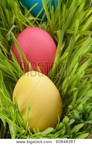Easter Eggs Hiden In Grass