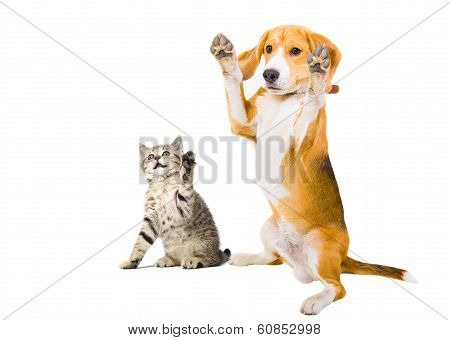 Portrait of a kitten and dog with raised legs