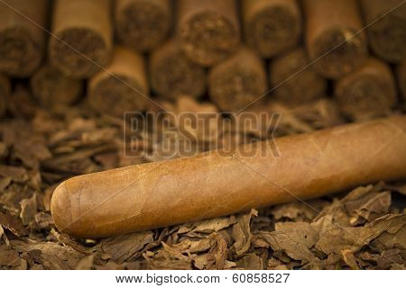 Cigar on Tobacco