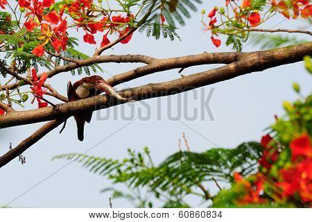 Common Kingfisher Bird (alcedo Atthis)