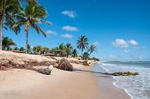 stock photo of natal  - Eroded beach with palms Pititinga Natal  - JPG
