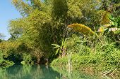picture of martha  - Wilderness along the Martha Brae River Falmouth Jamaica - JPG