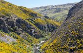 pic of trestle bridge  - Railway track of Taieri Gorge tourist railway runs alongside a ravine with bridges and tunnels on its journey up the valley