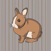 stock photo of cony  - Vector illustration of fluffy brown  sitting rabbit on striped background - JPG